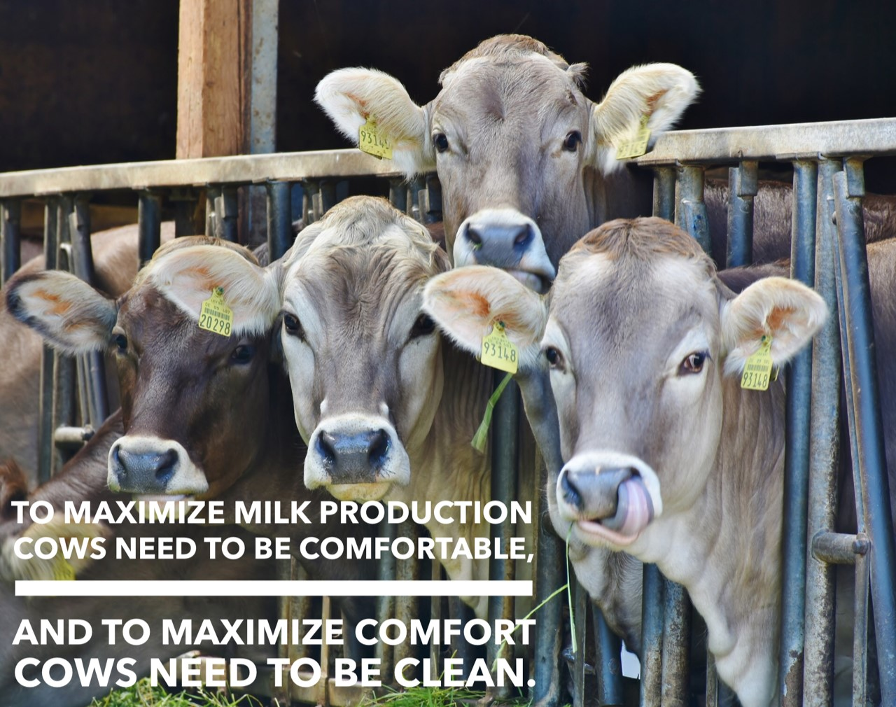 ARE YOU MAXIMIZING THE BENEFITS OF CLEAN WATER ON YOUR DAIRY?